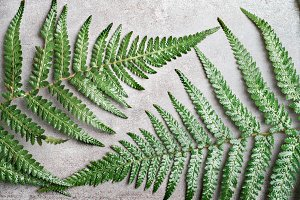 Two fern leaves on concrete