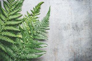 Green fern leaves layout