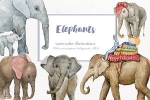 Elephants. watercolor illustrations