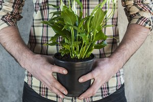Man holding a calla plant in a pot