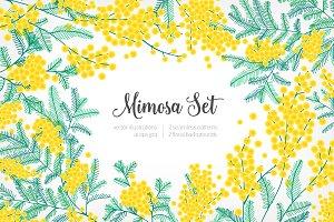 Mimosa, Happy Women's Day