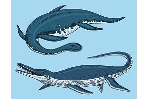 Dinosaurs Elasmosaurus, Mosasaurus, skeletons, fossils, winged lizard. American Prehistoric reptiles, Jurassic Animal engraved Hand drawn vector.