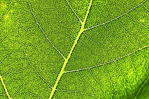 Macro shot of a leaf