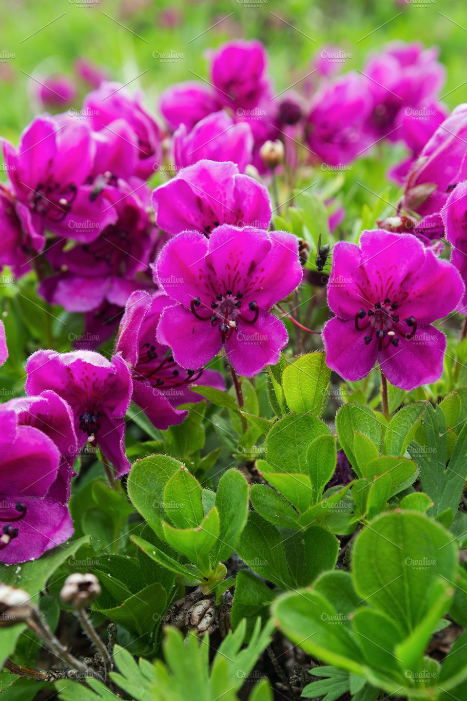 Beautiful purple flowers nature photos creative market beautiful purple flowers nature izmirmasajfo