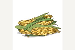Isolate ripe corn ears or cobs