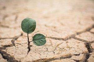 green plant on crack ground