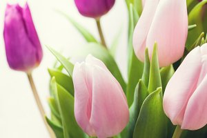 Beautiful pink and purple tulips on