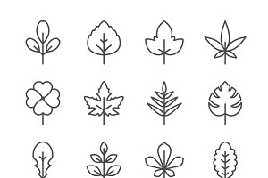 Set line icons of leaf