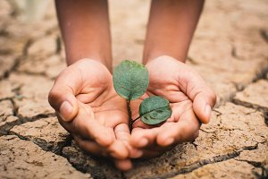 Hands of boy save little green plant