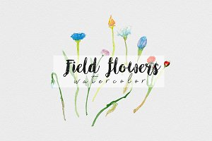 Field flowers. Watercolor set
