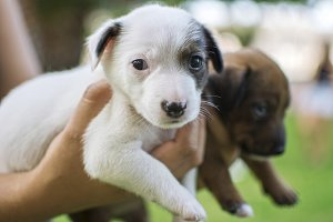 Puppies of dog, white and brown.