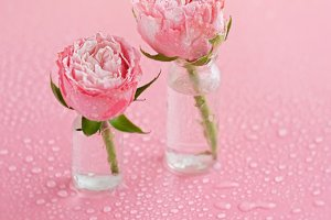 small pink roses in glass bottles