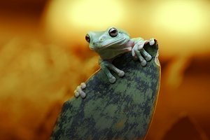 tree frog under the sunset