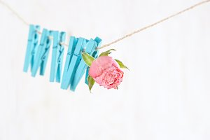 rose Bud hanging on the clothespin