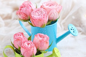 Pink roses in watering-can