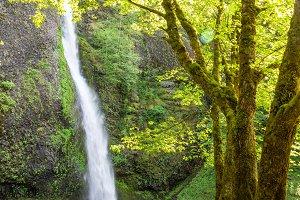 Horsetail Falls View