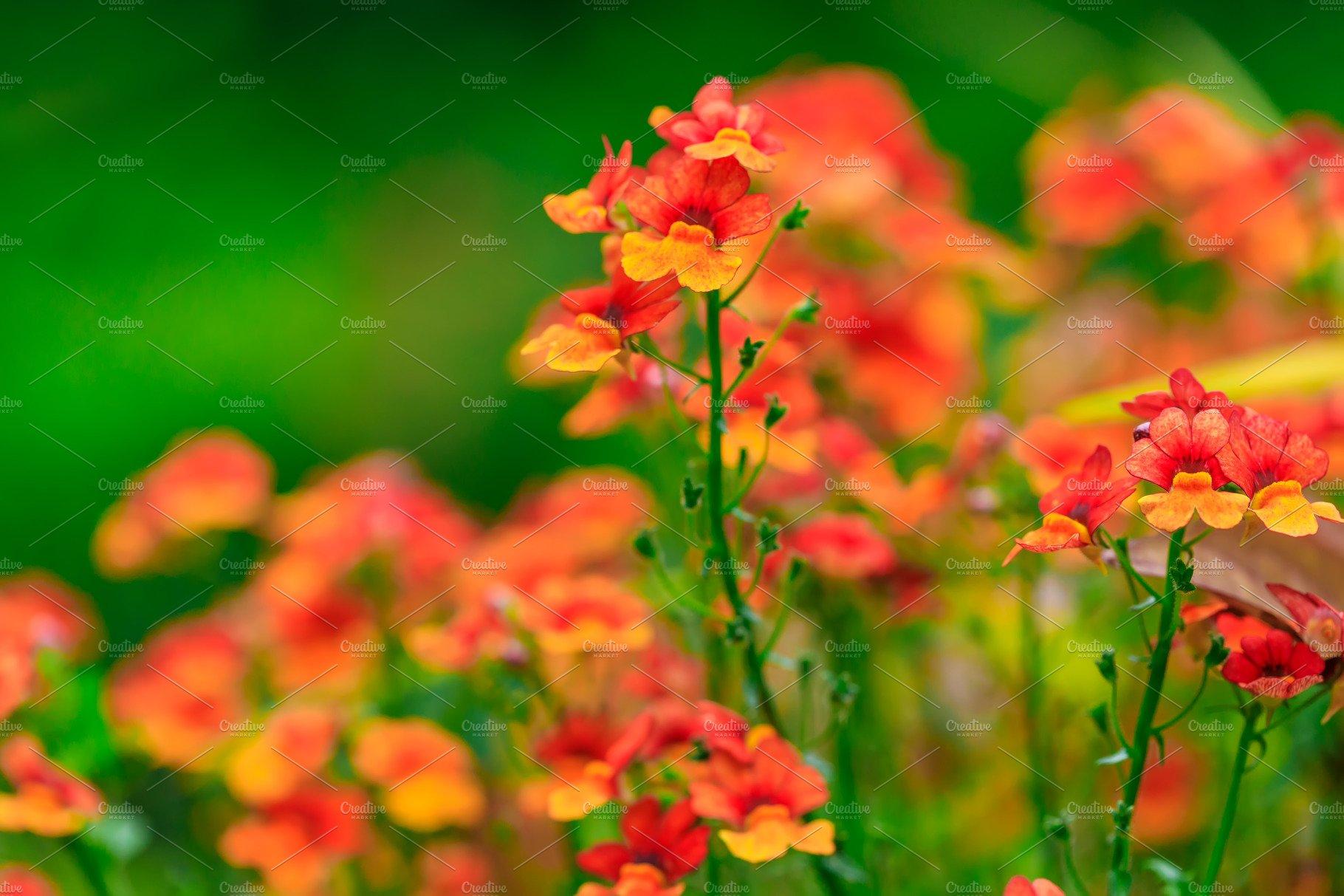 Nasturtium Edible Flower High Quality Nature Stock Photos Creative Market,Lemon Drop Shots Recipe