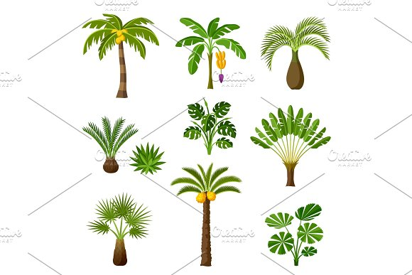 Tropical Palm Trees Set Exotic Tropical Plants Illustration Of Jungle Nature