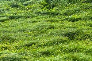 Grassy Pasture Field Background