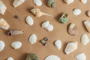 seashells on light background. flat view