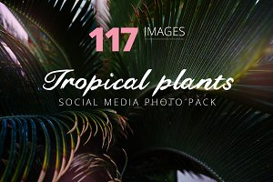 Tropical stock photo bundle