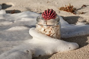 Sea Shells In The Jar On The Beach