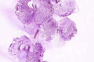 purple shiny decorative Orchid