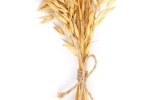 bunch of oat spike isolated on white background. Top view. Flat lay