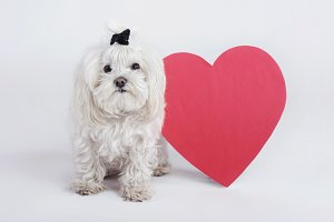 funny little dog with a heart