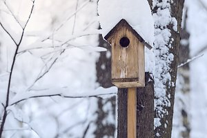 Birdhouse or nesting box