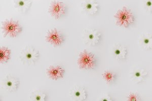 Abstract white and pink flowers