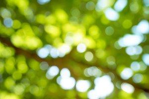 Fresh spring green nature Bokeh