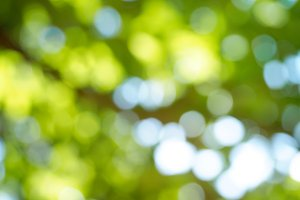 Abstract spring defocused background