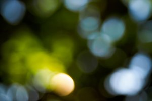 Abstract spring deep forest bokeh