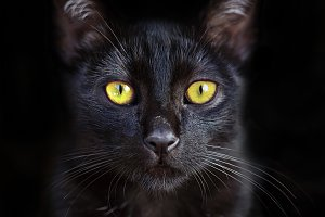 Portrait of cute black cat