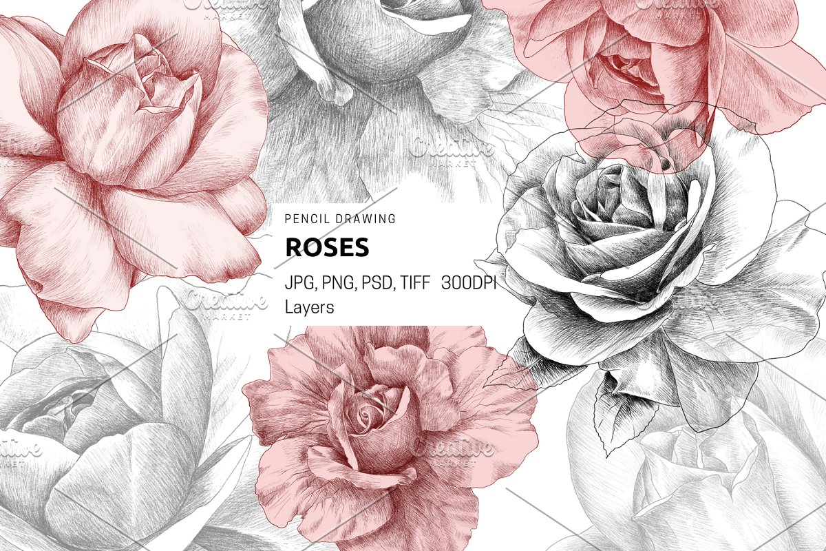 Roses pencil drawing graphic objects creative market