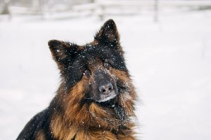 Portrait of a winter dog on the stre