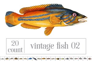 Vintage Illustrations: Fish 02