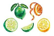 Watercolor citrus illustration