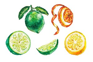 Watercolor citrus illustration