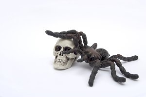 Skull and halloween spider.