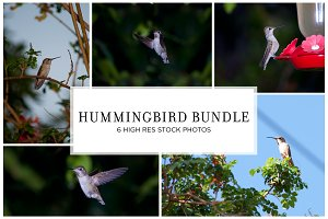 Hummingbird Stock Bundle