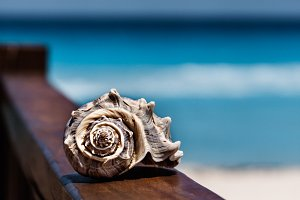 Sea Shell With Sea As A Background