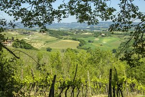 Vineyards in Tuscany landscape