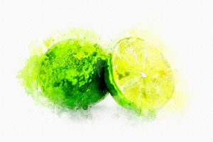 Watercolor Illustration Lime