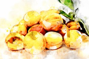 Watercolor Illustration Apricots