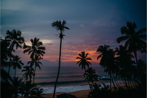 ocean view with palm trees at sunset