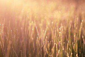 wallpaper grass, bokeh background,