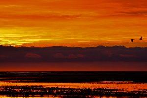 Orange and Yellow Sunrise