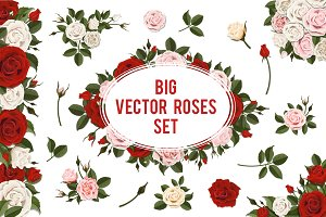 Set of white and red vector roses